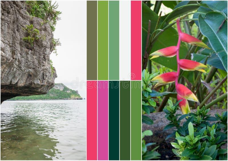 Beach on tropical island. Flowers. Collage. Beach on the tropical island at Thailand. Flowers. Collage stock photo