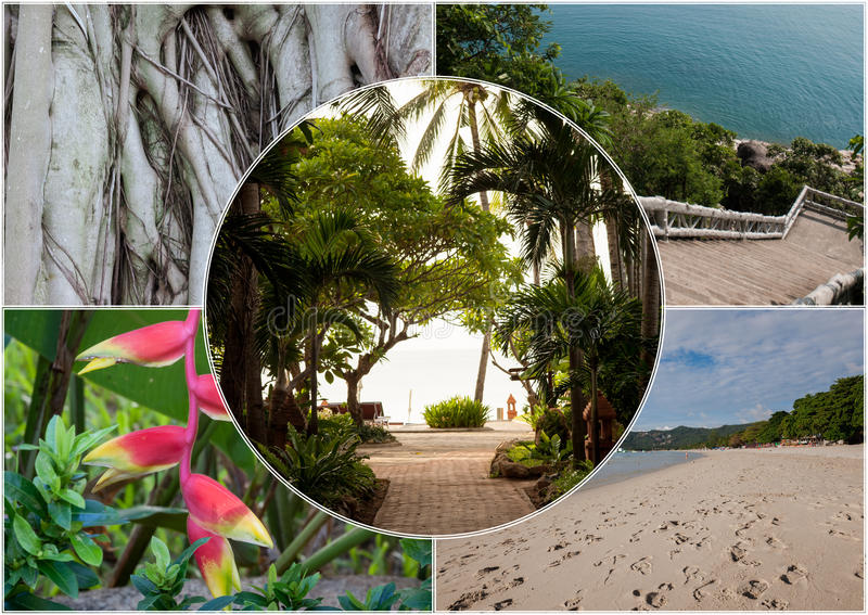 Beach on the tropical island. Thailand. Flowers. Collage. Beach on the tropical island at Thailand. Flowers. Collage royalty free stock images