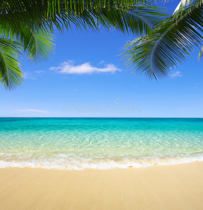 Beach and tropical sea. Beautiful beach and tropical sea royalty free stock image
