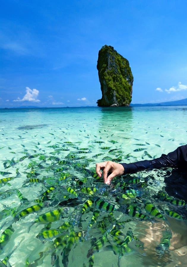 Beach and tropical sea, Krabi, in thailand. royalty free stock photo