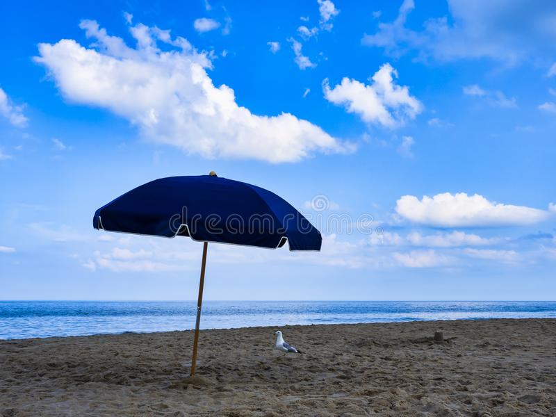 Beach Umbrella Alone Except for Gull stock photos