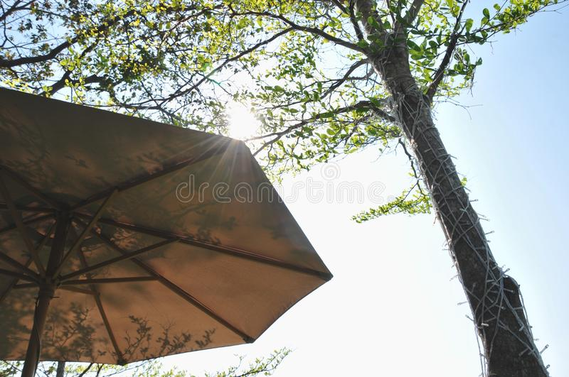 Beach umbrella from branches against the sun light with the big tree royalty free stock photography