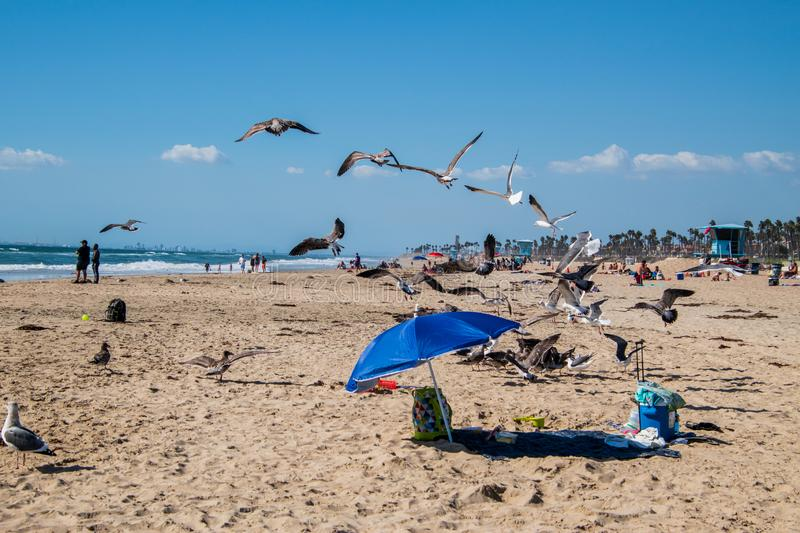 Beach view with sand and knapsack. Many seagulls are flying over the sand. People are on the beach. Huntington Beach, California - October 11, 2018: Beach view stock images