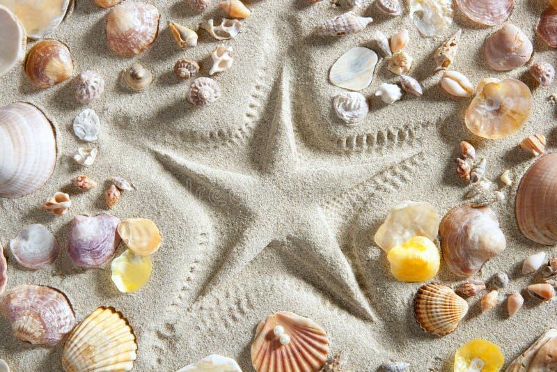 Beach white sand starfish print many shells stock image