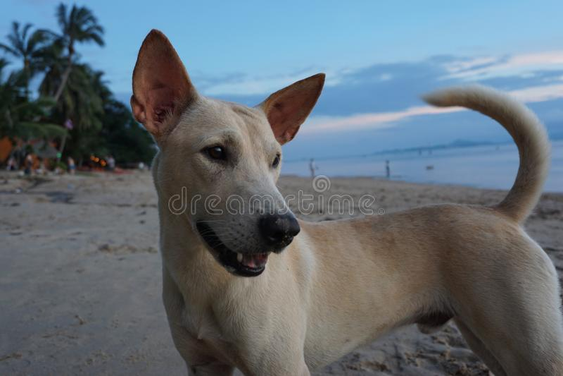 Beach Wildlife royalty free stock photo
