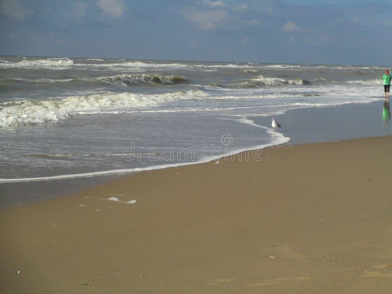 Beach, Zandvoort, Netherlands. Beach at the North Sea, Zandvoort, Netherlands royalty free stock images