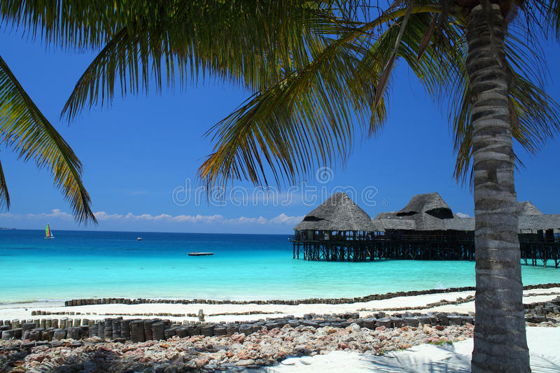 Beach in Zanzibar. Paradise sandy beach in Zanzibar, africa royalty free stock photos