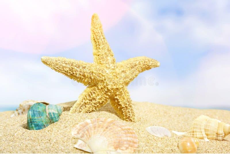 Beaches royalty free stock photos
