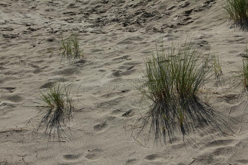 Beachflower arkivbilder