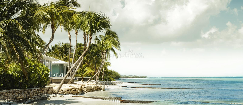 Beachfront bungalow under palm trees stock photo