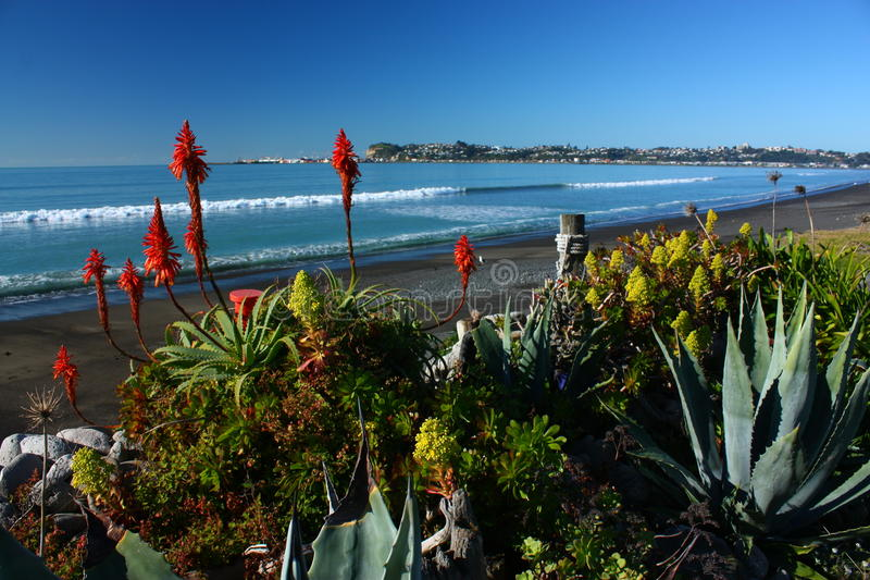 Beachfront garden in Westshore, Hawkes Bay, New Zealand stock images