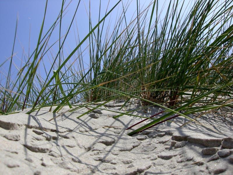 beachgrass стоковые фото