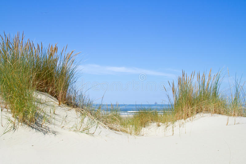 Beachgrass on dunes. View between two dunes, grown with Beach Grass, on the sea and in the distance a drilling rig royalty free stock images