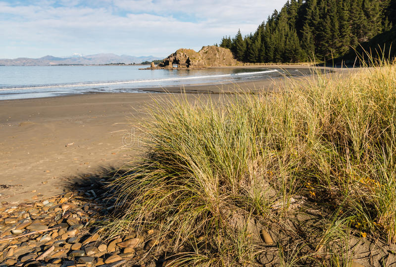 Beachgrass growing on sandy beach. In Whites Bay, New Zealand royalty free stock photography