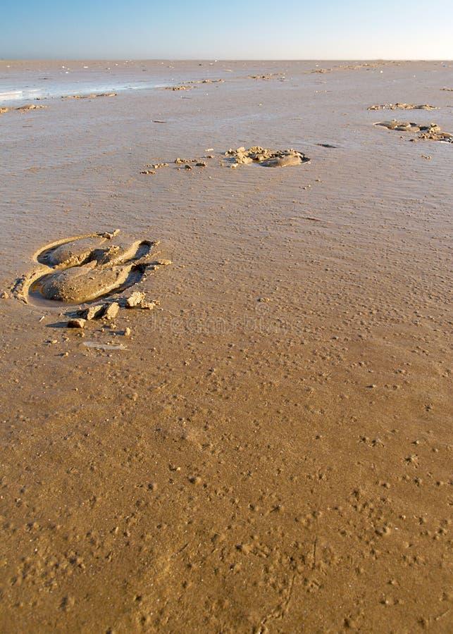 Beachhorse images libres de droits