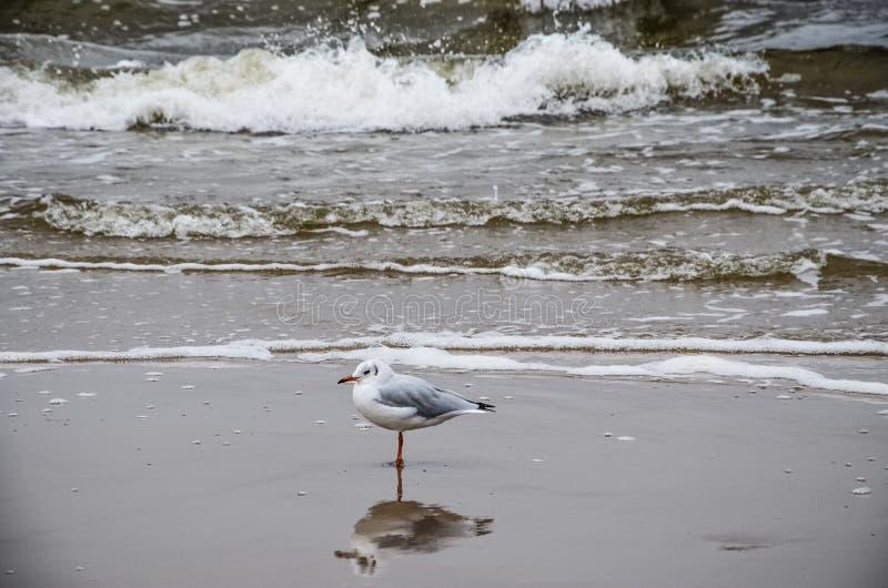 Beachlife images stock