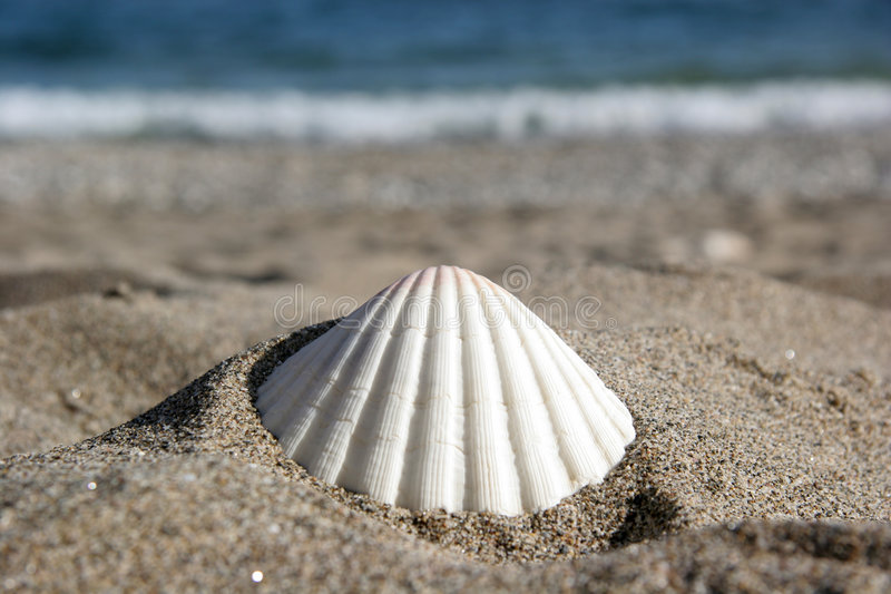 beachlife obraz royalty free