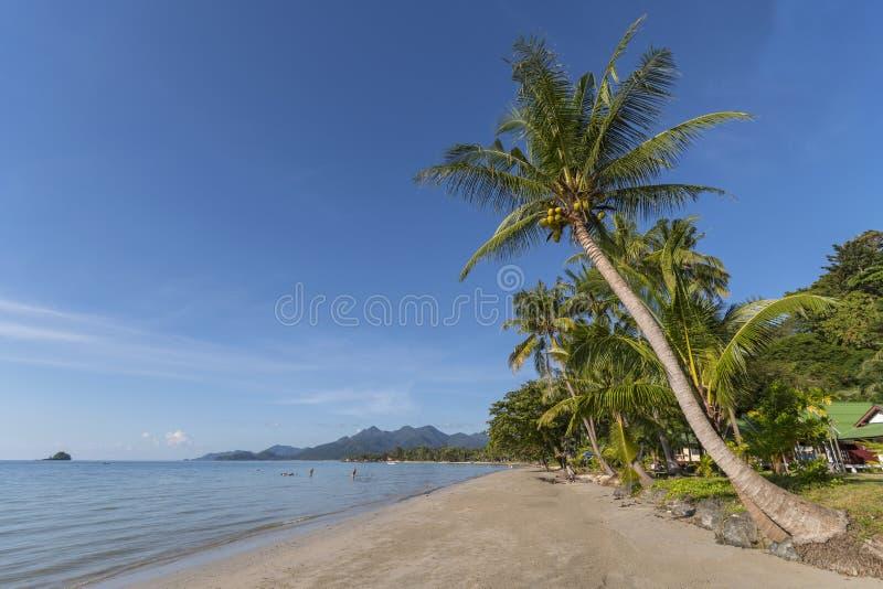Beachside med kokospalmen, Koh Chang, Thailand arkivfoto