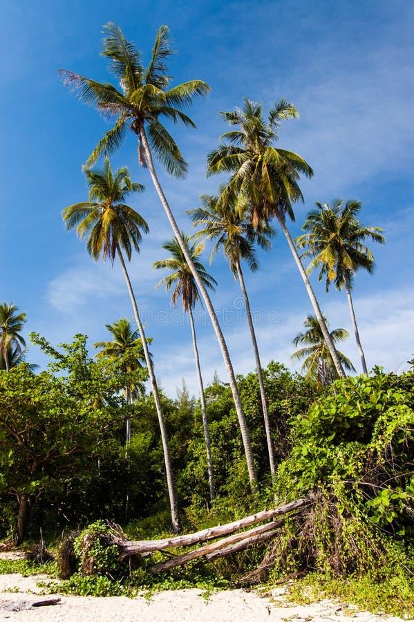 Beachside palmträd mot blå himmel royaltyfria bilder