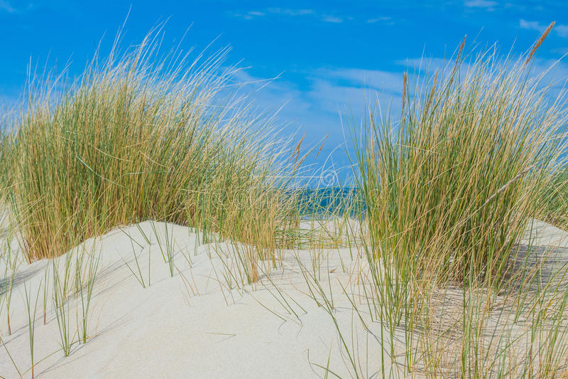 Beachside Zeeland stock photo