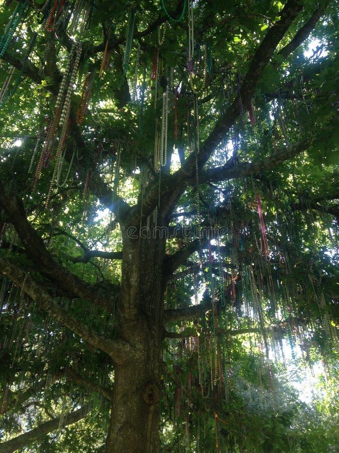 Bead Tree. Mardi Gras beads on a tree royalty free stock photography