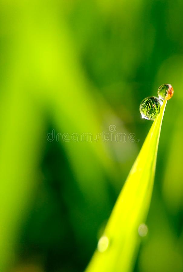Beads of dew on grass stock photos