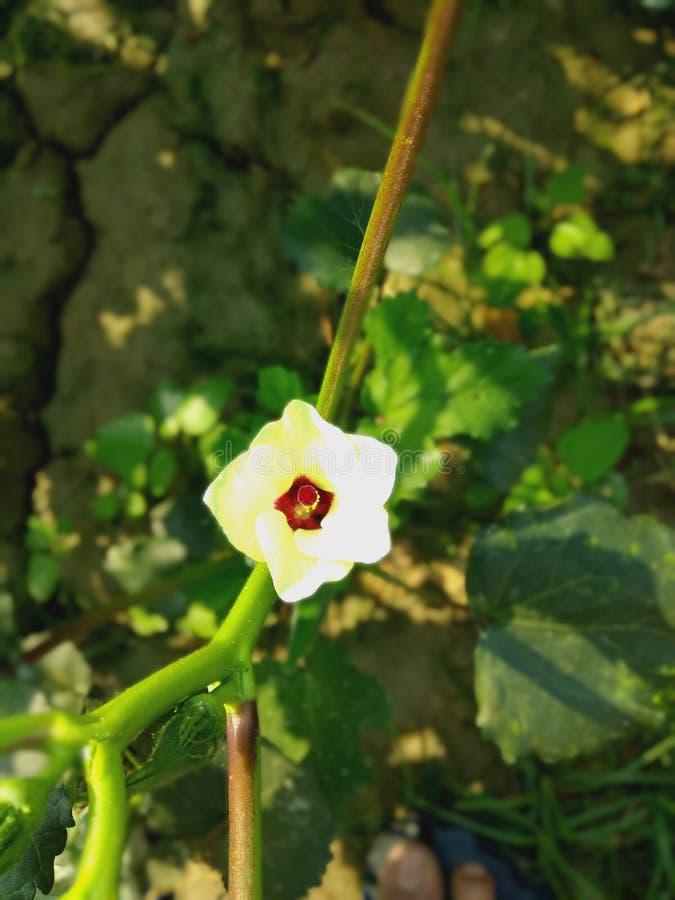 Beaeutiful λουλούδια φύσης στοκ εικόνες με δικαίωμα ελεύθερης χρήσης