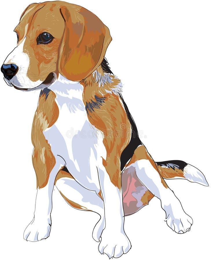 Beagle. Is sitting that look like she waiting somthing stock illustration