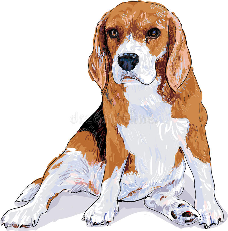 Beagle. Is sitting that look like she waiting somthing and now she look fat royalty free illustration