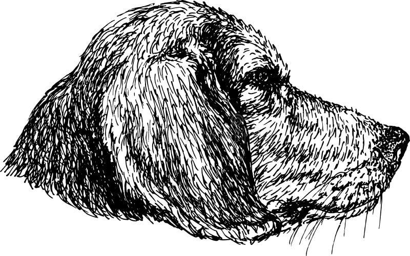 Beagle foto de archivo