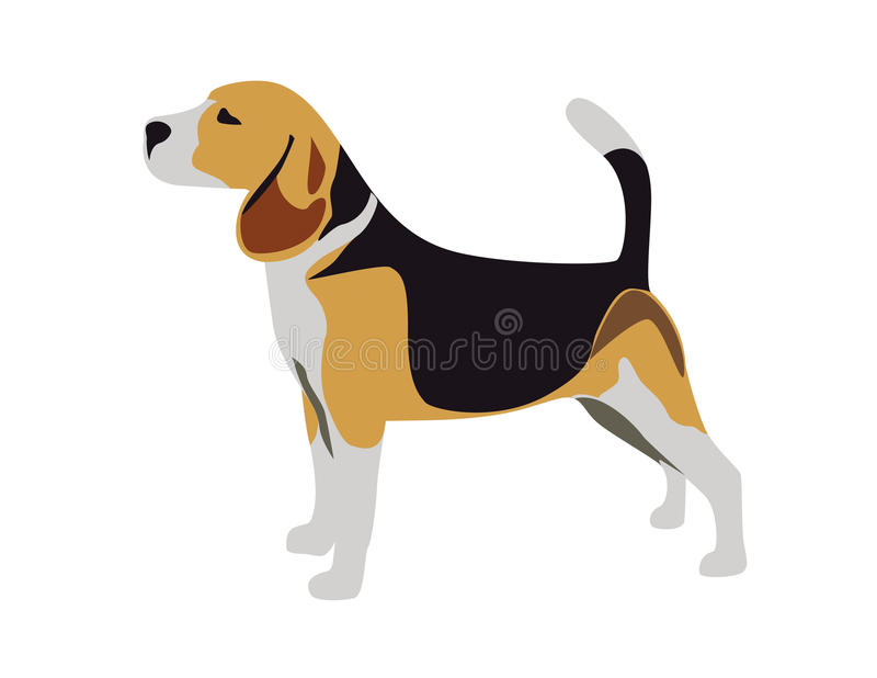 Beagle. An illustration of a beagle dog, isolated on a white background vector illustration