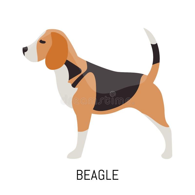 beagle Cane, icona piana Isolato su priorità bassa bianca fotografia stock