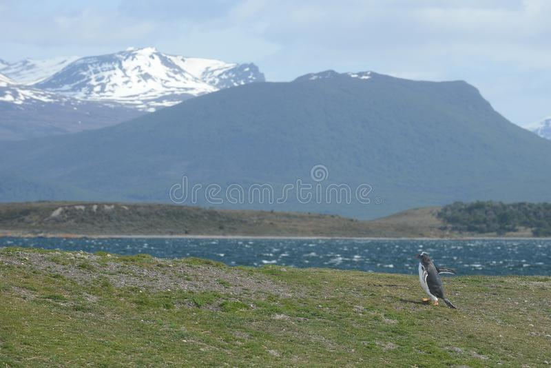 The Beagle channel separating the main island of the archipelago of Tierra del Fuego and lying to the South of the island. USHUAIA, ARGENTINA - NOVEMBER 16,2014 stock image