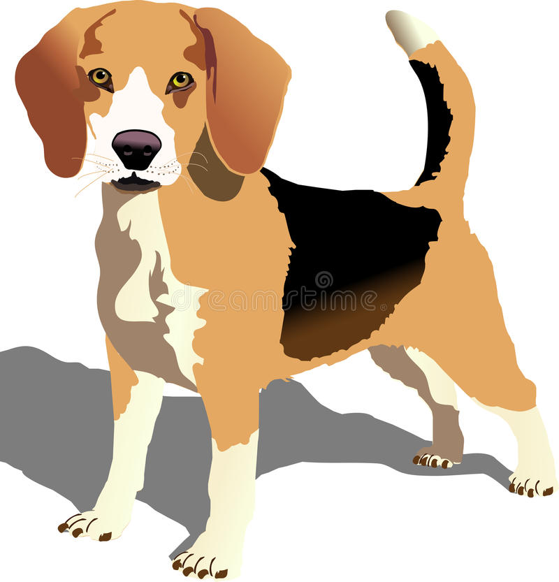 Beagle. Illustration of a beagle standing in a very alert mode royalty free illustration
