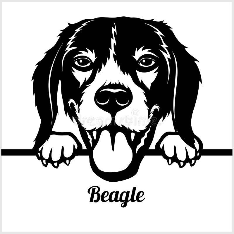 Free Beagle - Peeking Dogs - - Breed Face Head Isolated On White Stock Photos - 140214983