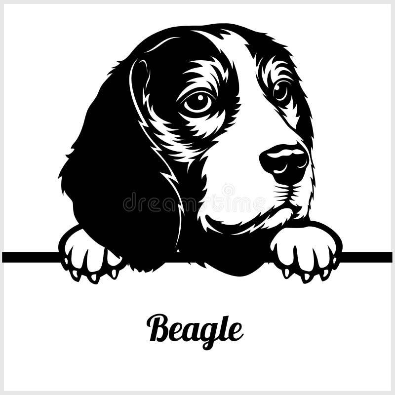 Beagle - Peeking Dogs - - breed face head isolated on white. Beagle - Peeking Dogs - breed face head isolated on white - vector stock vector illustration