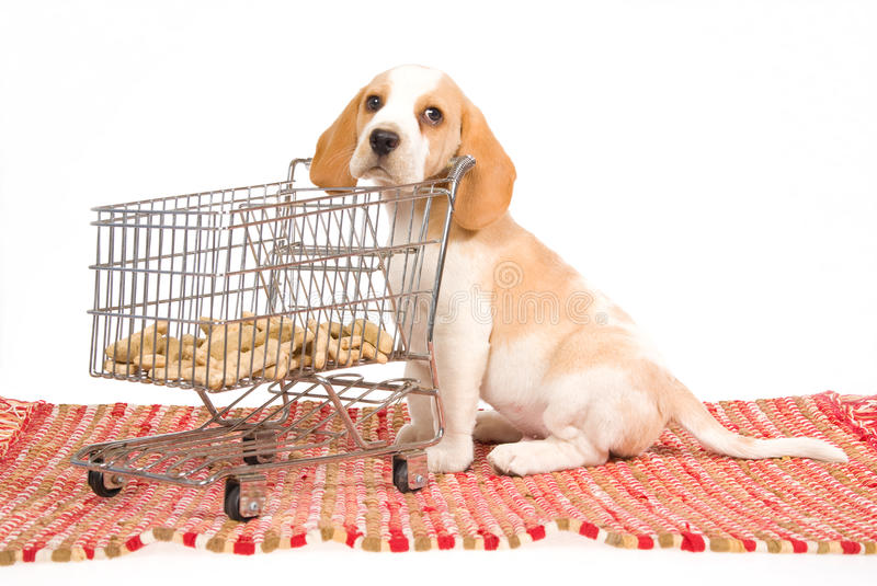 Download Beagle Puppy With Mini Shopping Cart Stock Image - Image: 10017025