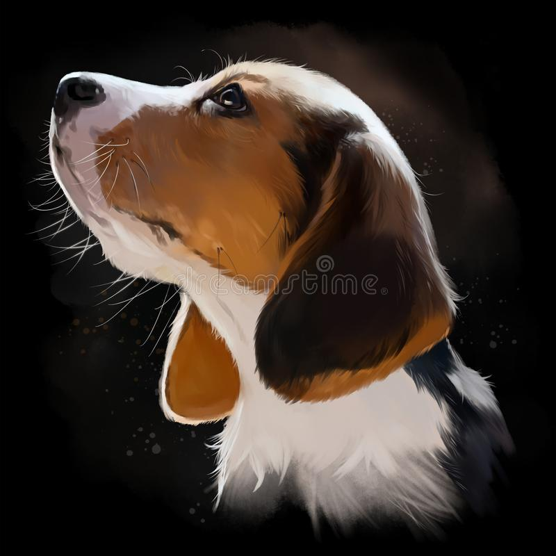 Beagle puppy portrait watercolor painting. Beagle puppy portrait watercolor black background vector illustration