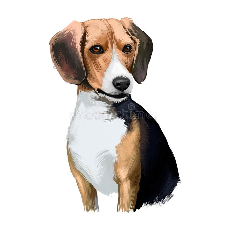 Beagle small scent hound breed dog digital art illustration isolated on white background. English origin, tricolor vector illustration
