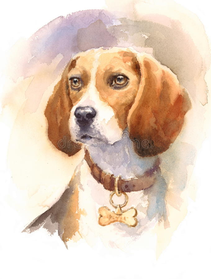 Beagle Watercolor Dog Breed Animal Illustration Hand Painted. Hand painted side view Watercolor Portrait of Beagle royalty free illustration