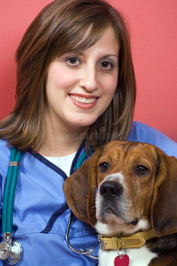 beagle weterynarz obraz stock