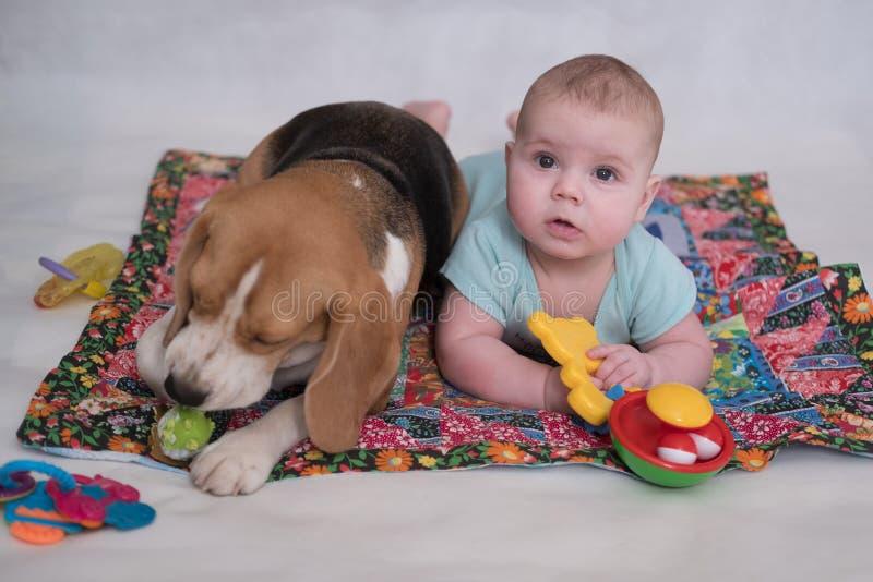 Beaglet och behandla som ett barn som ligger på det mattt arkivfoton