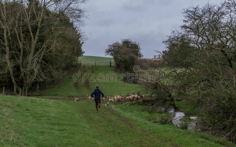 Beagling in the English countryside. Winter beagling in the English countryside stock images