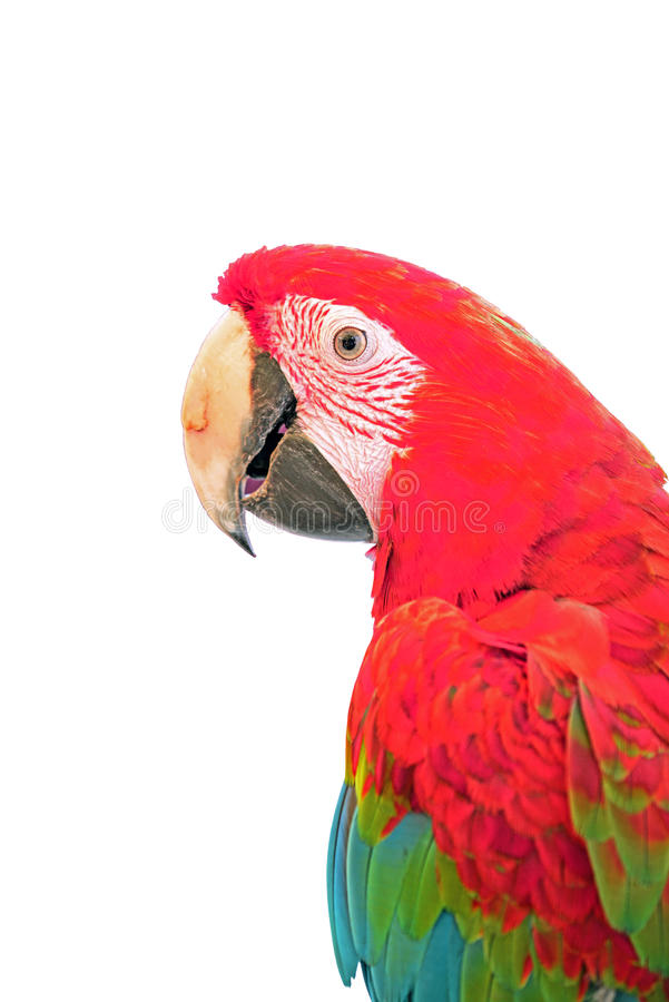 Beaitiful kolorowa ara odizolowywająca na bielu zdjęcia stock