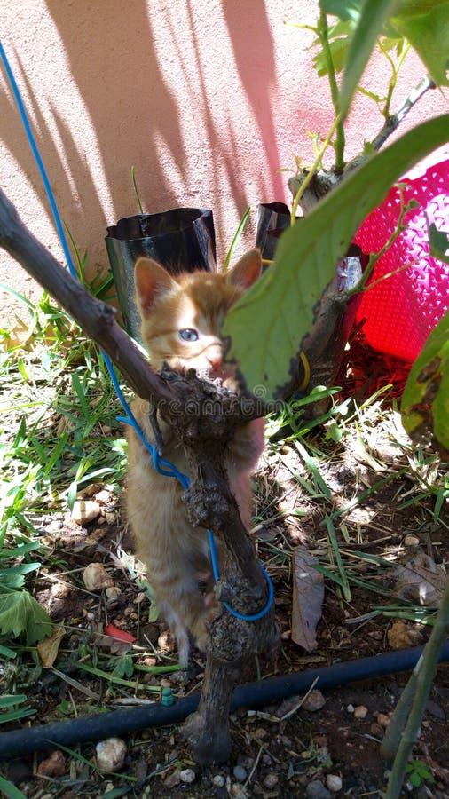 Beajty engraçado animal do gato de Caten foto de stock