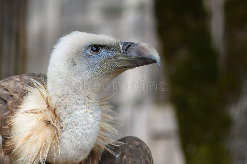 Beak, Bird, Fauna, Bird Of Prey Free Public Domain Cc0 Image