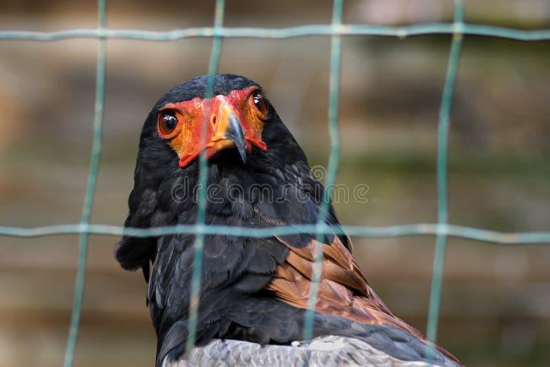 Beak, Bird, Fauna, Feather Free Public Domain Cc0 Image