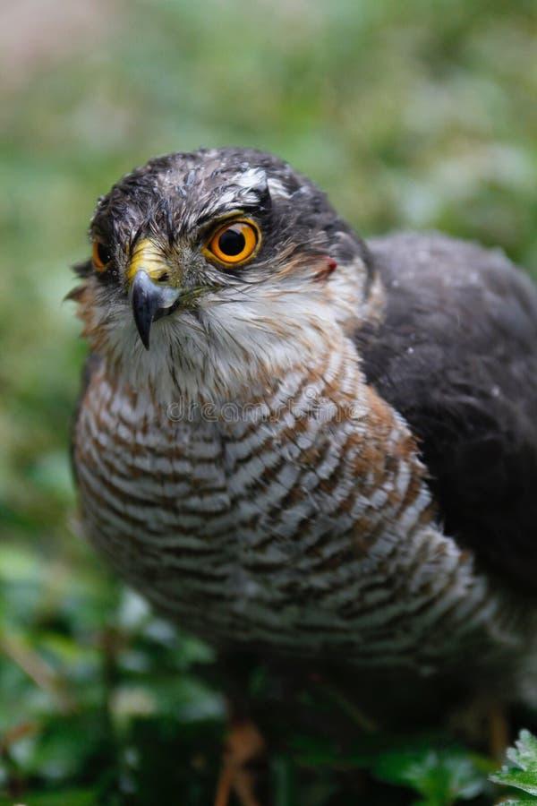 Beak, Bird, Fauna, Hawk Free Public Domain Cc0 Image