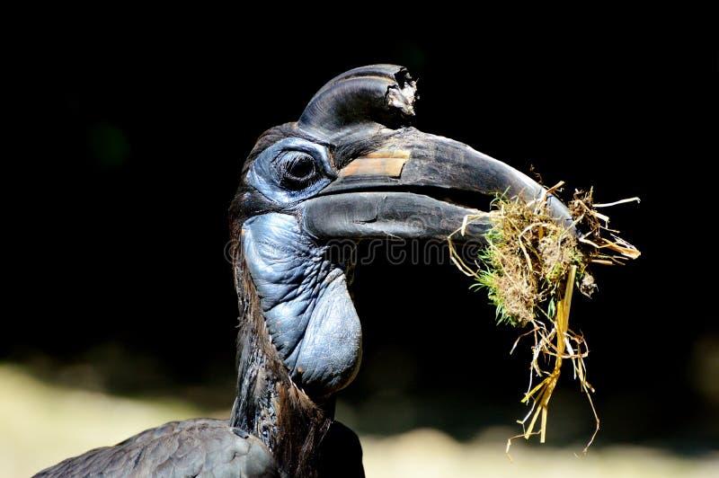 Beak, Bird, Fauna, Hornbill Free Public Domain Cc0 Image
