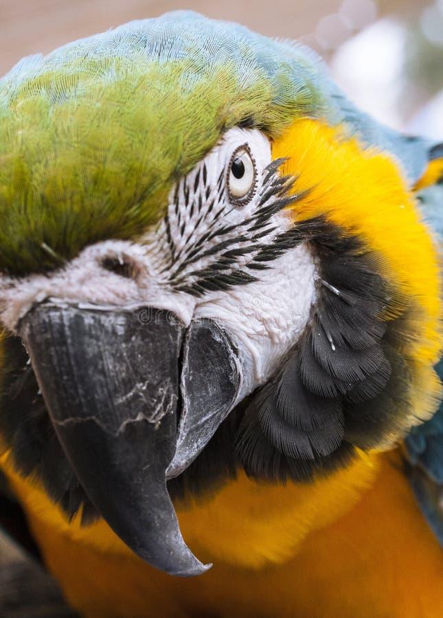 Beak, Bird, Macaw, Parrot royalty free stock photos